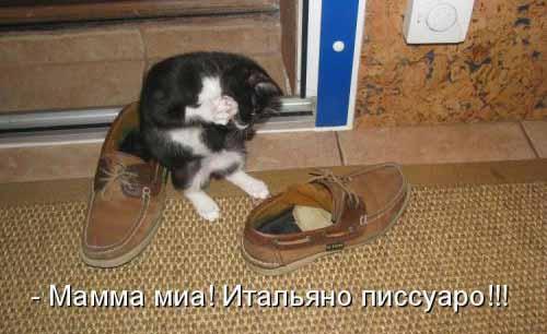 Самые смешные фото и картинки