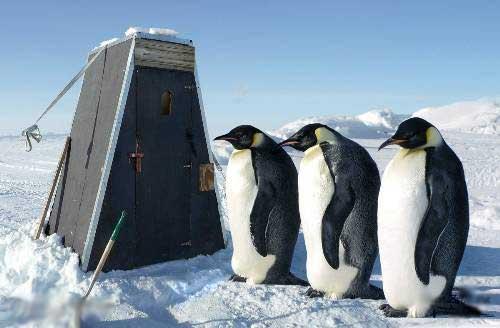 Прикольные фото пингвинов