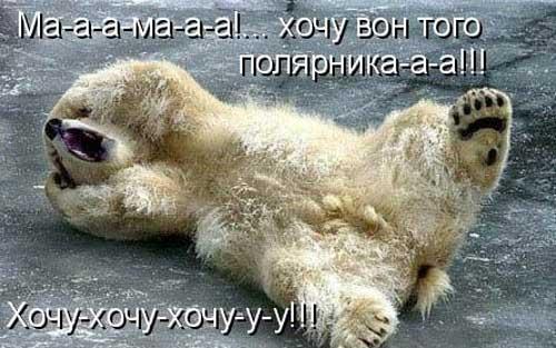 Ржачные фото животных с надписями