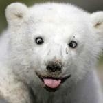 Прикольные смешные картинки с животными