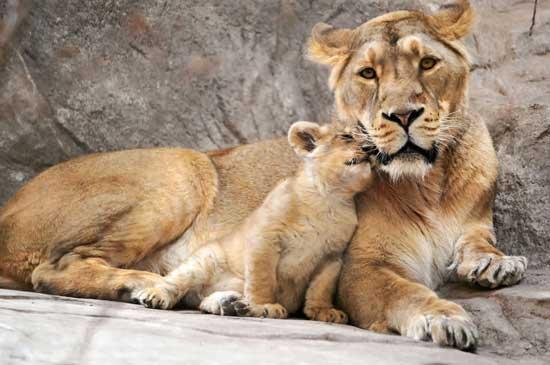 Животные мама и малыш - картинки