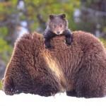 Животные мама и малыш — картинки