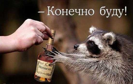 muzhskie_tosty.jpg