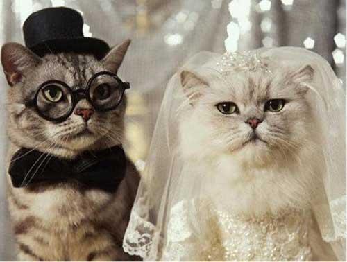 Прикольные стихи поздравления со свадьбой
