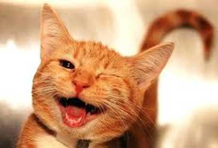 Прикольные улыбки - фото