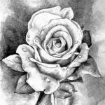 Рисунки цветов простым карандашом