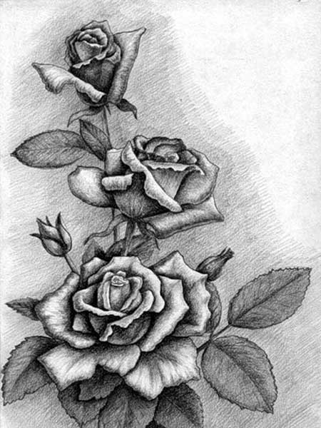 Цветы рисунки карандашом простые