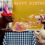 Прикольные фотографии с днем рождения