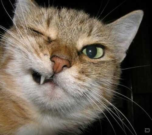 Очень смешные коты - фото