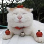 Очень смешные коты — фото