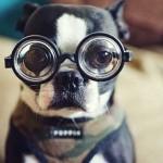 Смешные собачки — фото