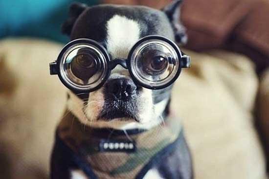 Смешные собачки - фото