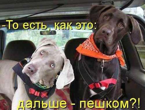 Самые смешные собаки - фото