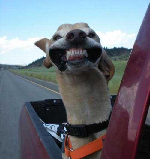 Собаки - ржачные картинки