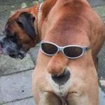 Собаки — ржачные картинки