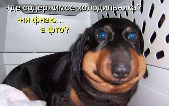 http://smejsa.ru/wp-content/uploads/2014/07/sobaki4.jpg