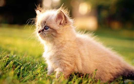 Самые красивые и пушистые котята