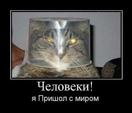Ржачные демотиваторы про котов