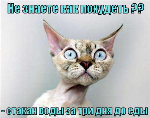 Смешные картинки про петухов - d154