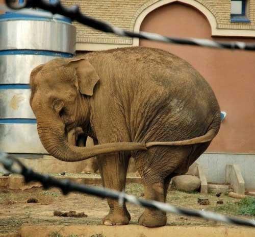 Картинки - смешные слоны