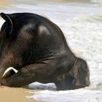 Картинки — смешные слоны