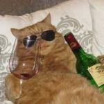 Толстые коты — фото
