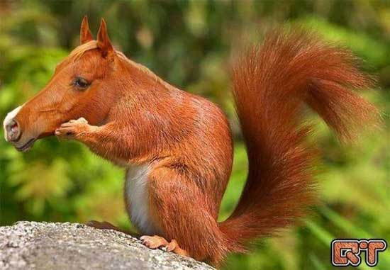 Фотожабы животных