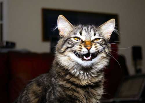 Ёшкин кот - фото