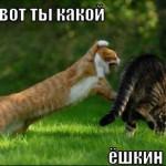 Ёшкин кот — фото
