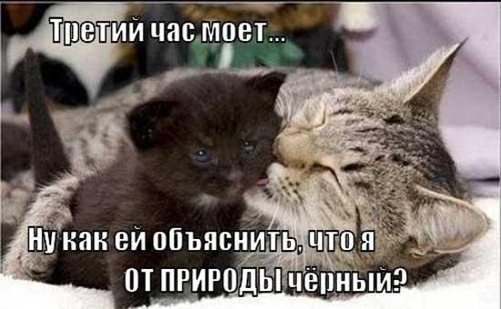 Смешные фотографии кошек и котят