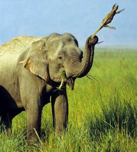 Прикольные фото слонов