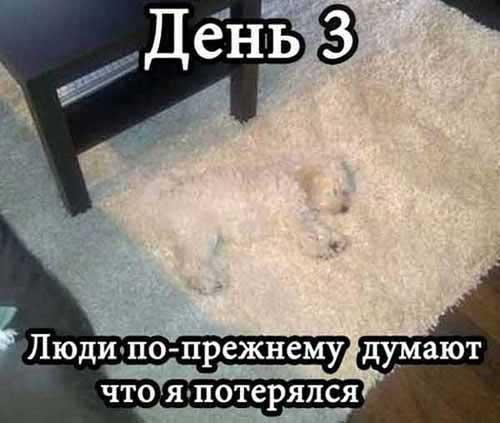 Анекдоты про домашних животных