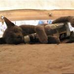 Пьяные животные — фото