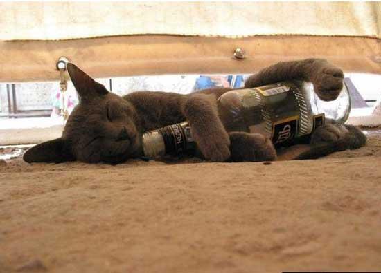 Пьяные животные - фото