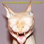 Смешные фото лысых кошек