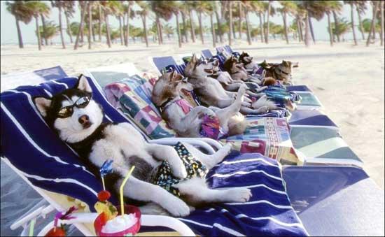 Смешные фото на пляже