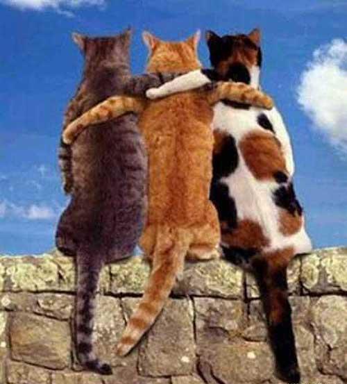 Прикольные стишки про дружбу