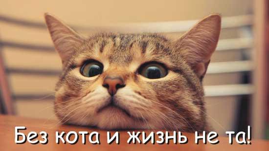 Смешные высказывания с котами