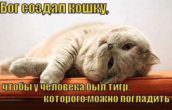 Цитаты про котов и кошек