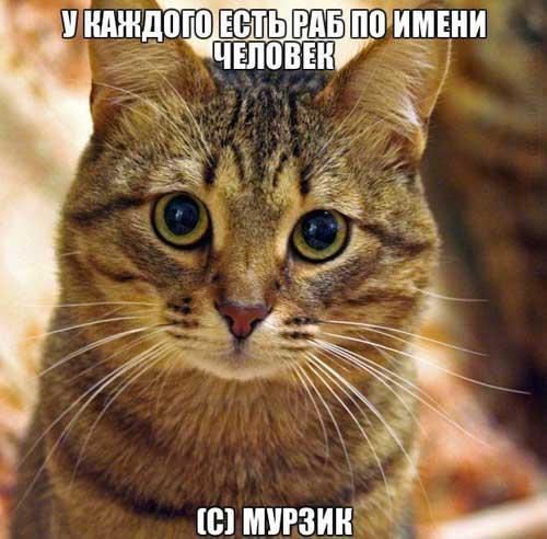 Картинки кот гарфилд
