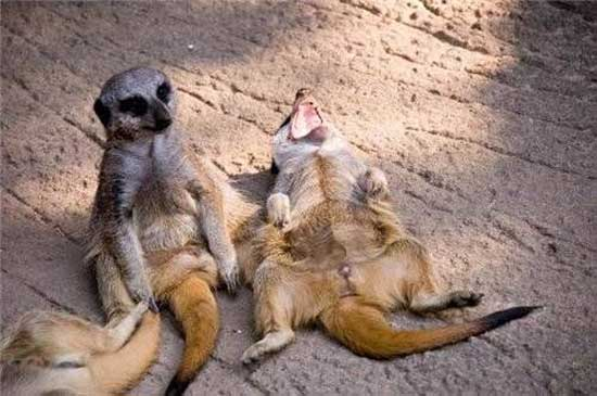 Самые смешные картинки про животных