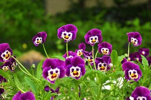 Прикольные фото цветов