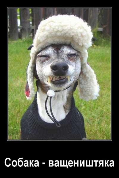 Демотиваторы про собак