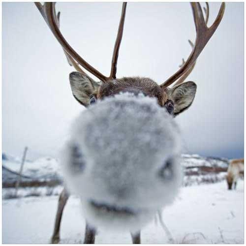 Смешные картинки оленей