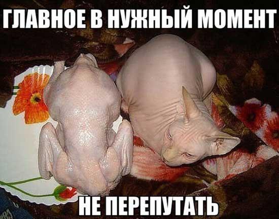 Прикольные сфинксы - фото