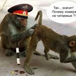 Смешные обезьяны — картинки