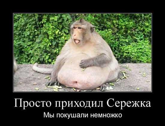 Смешные обезьяны - картинки