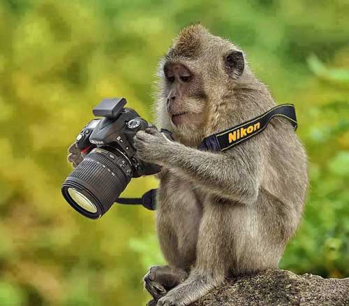 Самые прикольные животные - фото