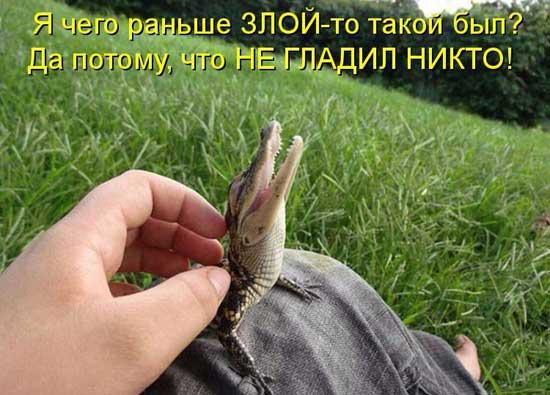 Ржачные картинки про животных