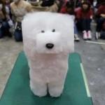 Смешные стрижки собак — фото